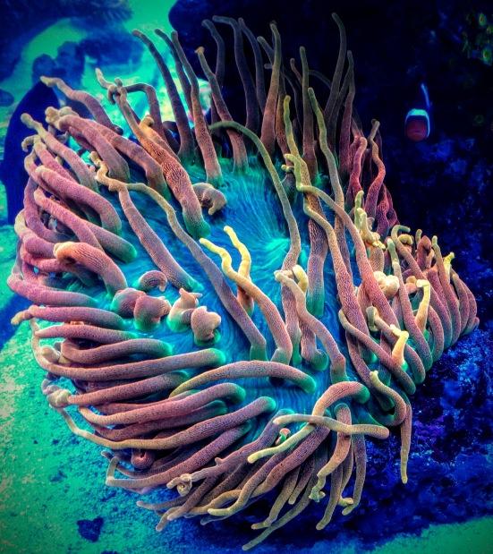 B.S. Reef Aquarium
